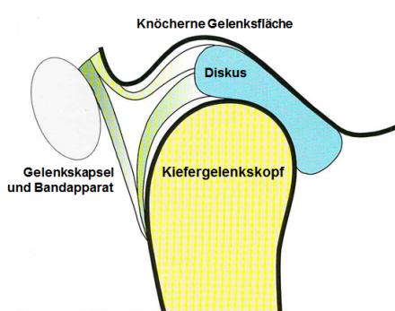 Kiefergelenk Anatomie